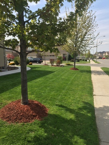 Fine Line Lawn Care, Hamilton, ON, Ontario, Hamilton, Burlington, Dundas, Ancaster, Stoney Creek, Grimsby, ice removal, snow removal, snow and ice removal, sidewalk snow removal, landscapes, lawn care, early spring lawn fertilizing, early spring granular weed control, spring clean up, hedge and shrub trimming, small tree trimming, mulch layouts, weeding, weed removal, vegetation removal, property maintenance, grass cutting, debris removal